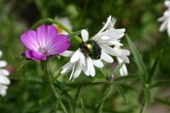 Die Blumenvielfalt der Obermühle Gottsdorf