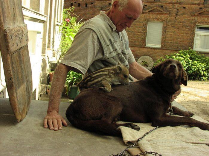db Puschel Paul MRs1 - Komische Tierliebe auf der Obermühle