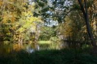 Teich Obermühle Wald
