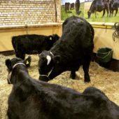 Warum wir bei Methan nicht nur an Kühe und Schafe denken sollten